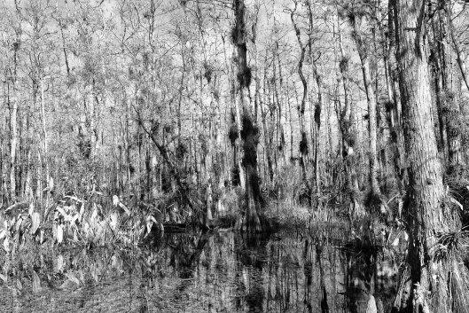Ana Garcia Photo,Ana Garcia Photography,Everglades,trees,Miami photography,Florida Nature Photographer,big cypress national preserve,Landscape Photographer,Florida Landscape Photographer,Florida Everglades National Park,Florida Everglades,Everglades National Park,big cypress,cypress trees,sky,loop road,photographer,Florida Photographer,